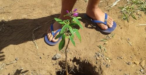 Ilustração da notícia: Prefeitura investe em Educação Ambiental